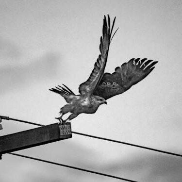 Photography by I. Giardina